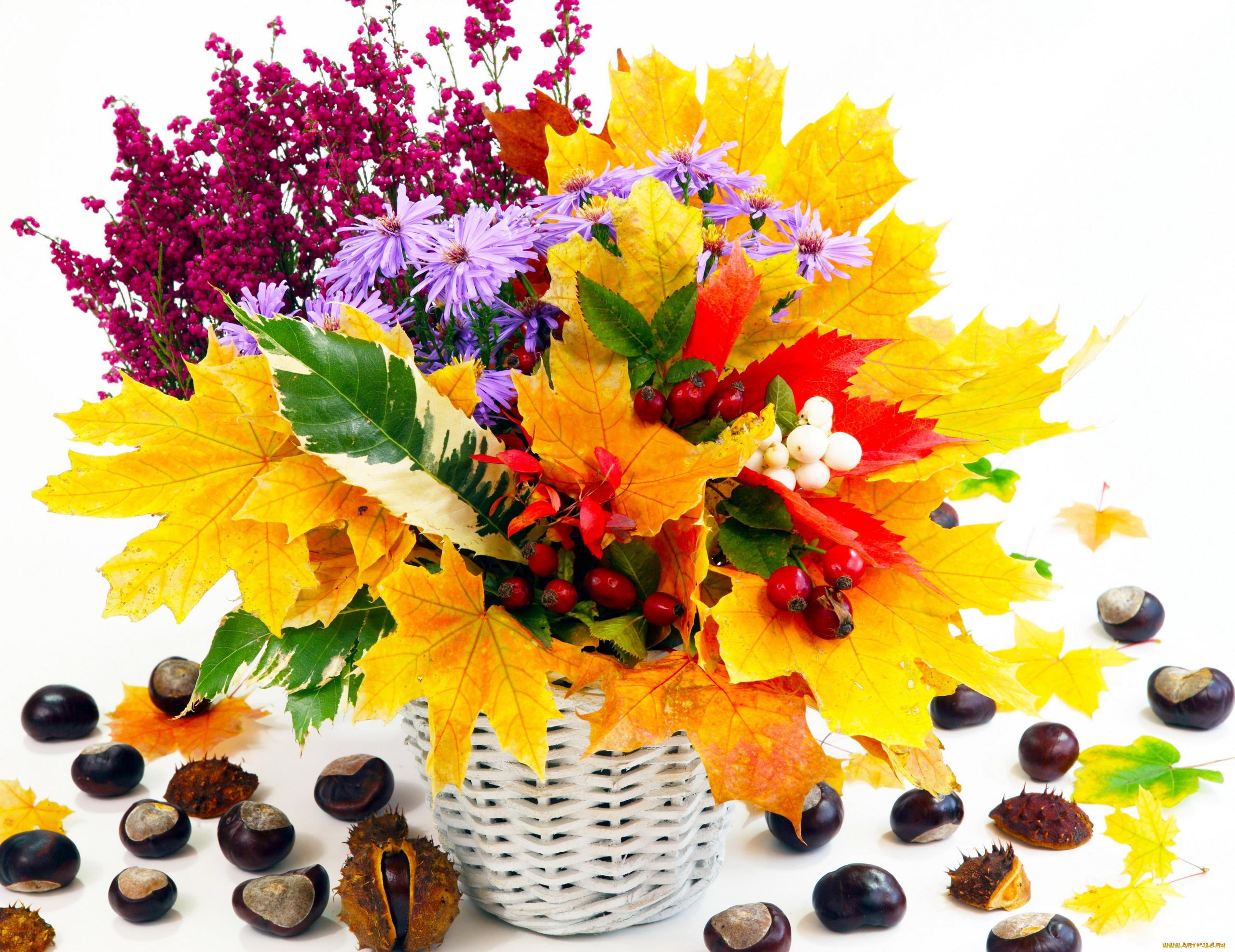 Обои для рабочего стола цветы осенние астры 1